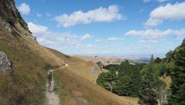 The track at Te Mata