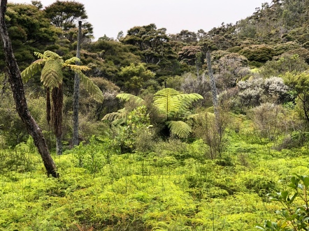 Tree ferns and fern forest cover