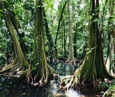 The BOtnaical gardens in Tahiti