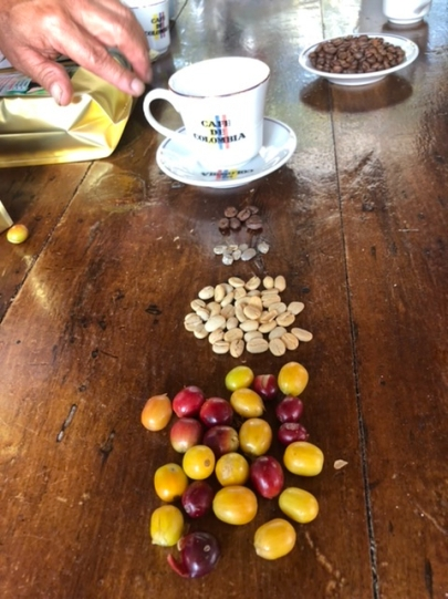 The stages of coffee production