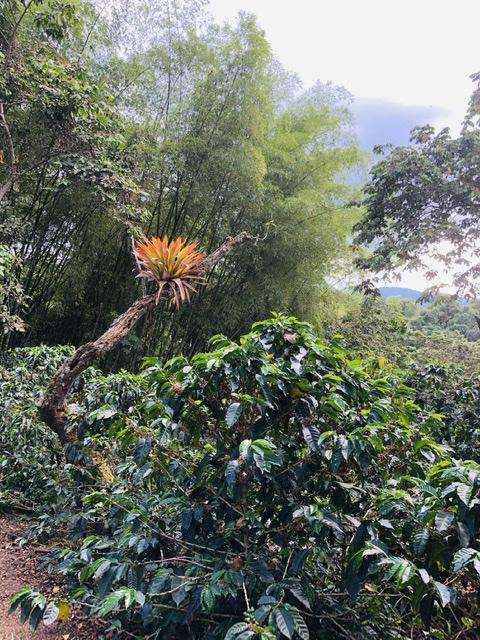MArvellous bromeliad in the estate
